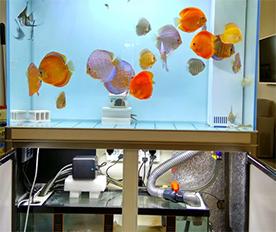 空气过滤棉应用于鱼缸